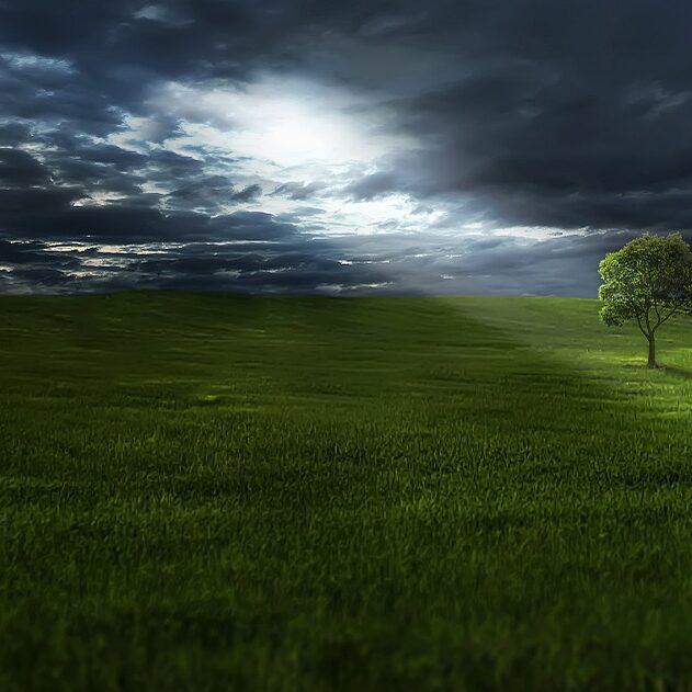 tree-736888_960_720